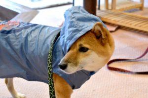 犬 散歩 レインコート