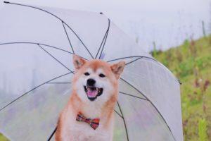 台風 犬 散歩 トイレ